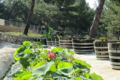 le jardin 4