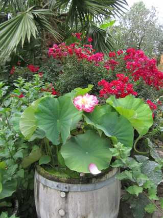 le jardin 36